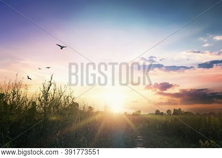 World Environment Day Concept: Sunset On Green Meadow And Grass In The Evening