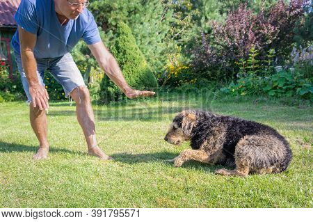 Owner Showing Sign Of Lying Down To His Shaggy Dog On Green Loan. Man Showing Gesture His Senior Dog