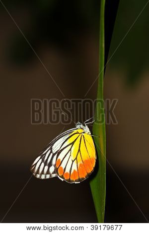 A Butterfly Resting On  Leaf.