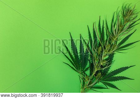 One Cannabis Branch On Green Background,  Marijuana As A Therapeutic And Recreational Drug, Copy Spa