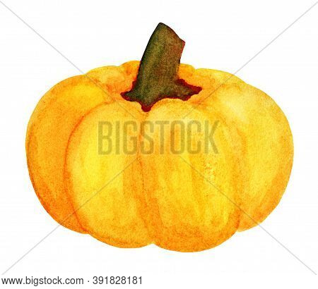 Nice Orange Pumpkin. Winter Squash Harvest. Autumn Watercolor Gourd Vegetable Isolated On White Back