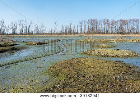 Swamp in Dutch Biesbosch