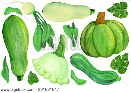 Green Squashes And Radish On White Isolated Background. Watercolor Green Vegetable Set. Radish, Pump