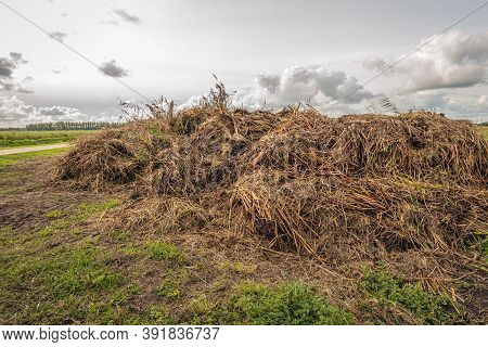 Heap Of Waste With Plant Remains After The Annual Ditch Cleaning. Ditches Must Be Cleaned Annually B
