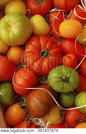 Heirloom Tomatoes Also Known As Heritage Tomatoes