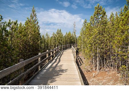 The Boardwalk Trail Leading To Steamboat Geyser, The Worlds Largest Geyser, In Yellowstone National
