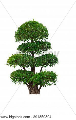 Green Tree Isolated On A White Background.