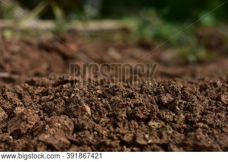 Clean Soil For Cultivation. The Potting Soil Or Peat Is Suitable For Gardening And Is One Of The Fou