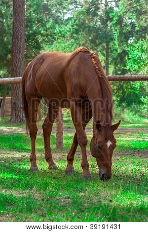 Forest Brown Horse