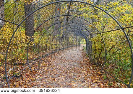 Beautiful Path Surrounded By Bright Colors Of Fall Foliage