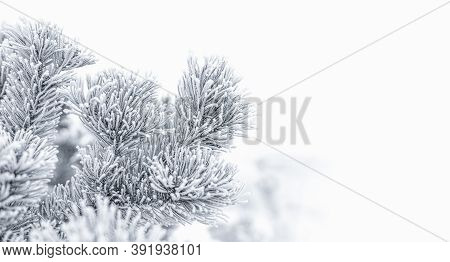 Christmas Tree In Snow Background. Nature Image.