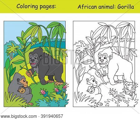 Vector Coloring Pages With Cute Gorilla Family In African Area. Cartoon Isolated Colorful Illustrati