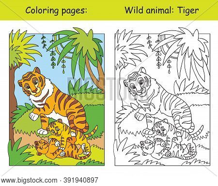 Vector Coloring Pages With Cute Tiger Family In Forest. Cartoon Isolated Colorful Illustration. Colo