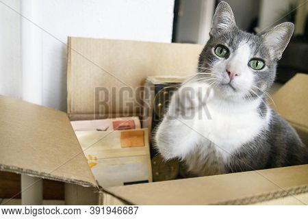 A Cat Sitting In A Cardboard Box With Dry Food And Snack. ?oncept Online Shopping And Pets Food Cont