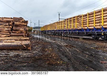Timber On The Freight Train. Transportation And Sustainable Development Theme. Autumn Foggy Morning