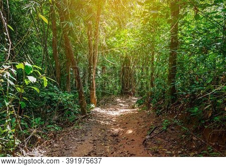 Way In Forest With Green Leaf And Sunlight Background