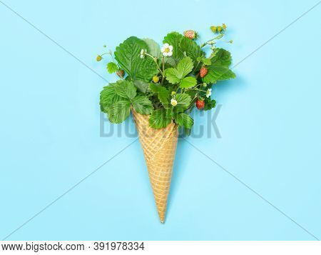 Favela Cone With Leaves, Flowers And Strawberries On A Blue Background. Copy Space, Flat Lay. A Conc