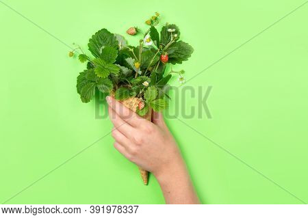A Female Hand Holds A Favela Horn With Leaves, Flowers And Strawberries On A Green Background. Copy