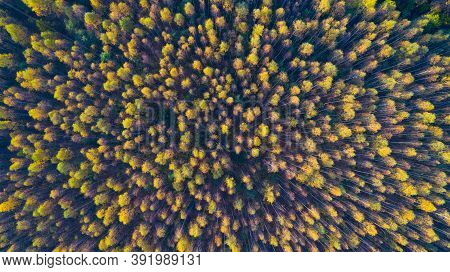 Aerial Top View Autumn Forest, Texture Of Forest View From Above.
