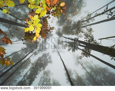 Fall Fairy Forest In Fog. Enchanted Autumn Forest In Fog In The Morning. Landscape With Trees, Color