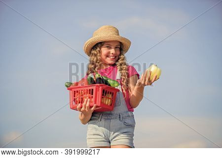 Vegetables In Basket. Girl Adorable Child Farming. Homegrown Veggies. Organic Food. Sunny Day At Far