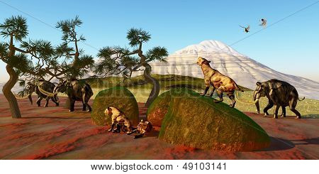 Saber Toothed Cat Family