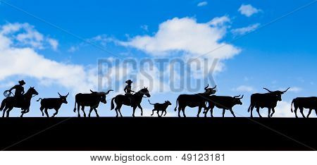 Cowboy and cows shadow with blue sky