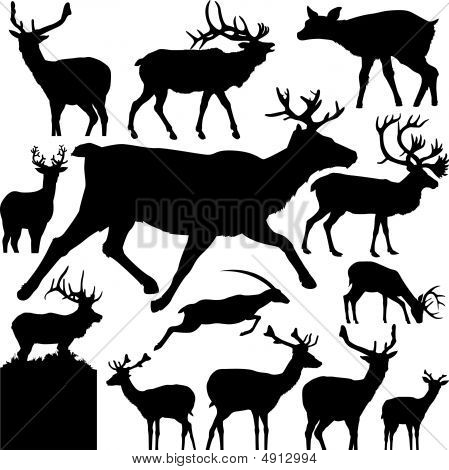 Detailed Vectoral Deer Silhouettes