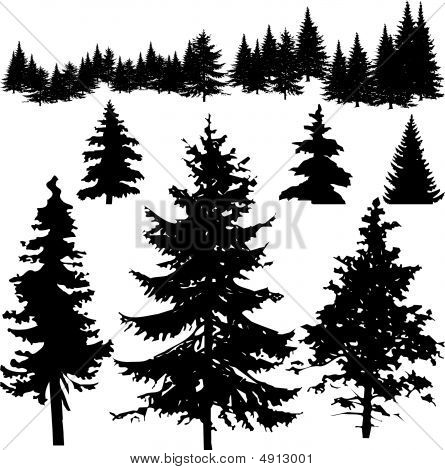 Detailed Vectoral Pine Tree Sillhouettes
