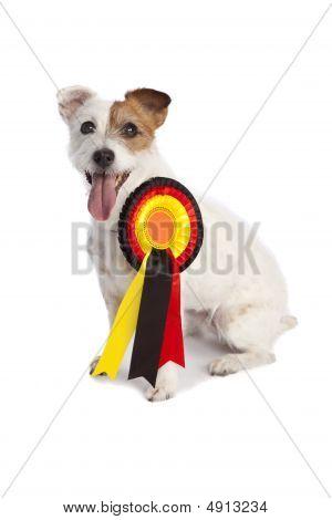 Jack Russell Terrier Winner