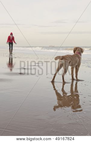 Rear view of mixed breed dog with owner calling in background at the ocean beach