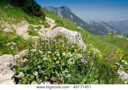 Blooming Flowers In The Mountains