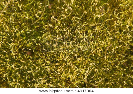 Abstract Mossy Background 2