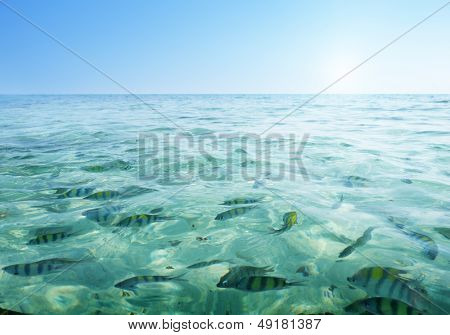 tropical fishes in Krabi province, Thailand