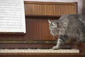 Side view of cat walking on piano keys with music sheet poster
