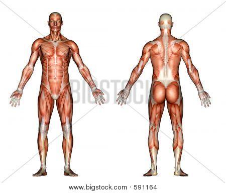 Muskeln Mann weiß