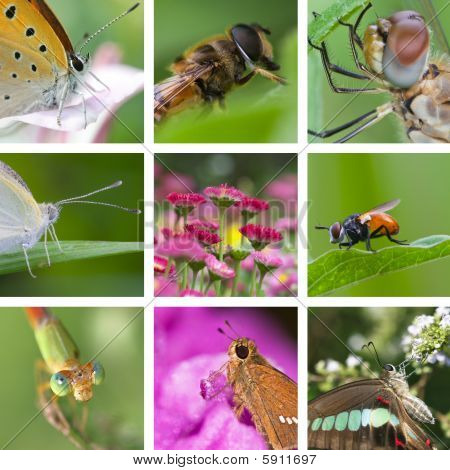 the concept of the insects collection of a garden poster