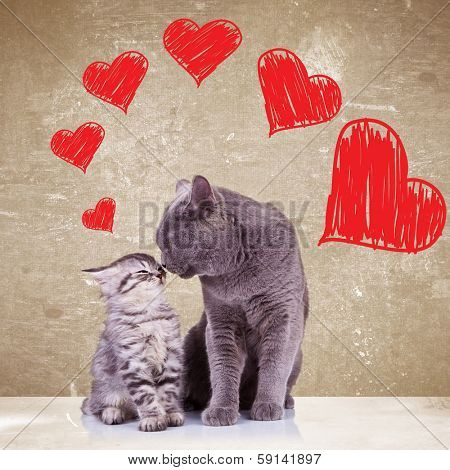 in love cats kissing each other on valentines day