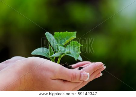 a woman holding a small plant in hand. symbolfotoo for nature and growth