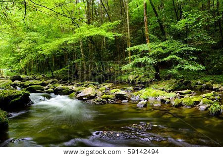 Slow Moving Stream In Smoky Mountain National Park