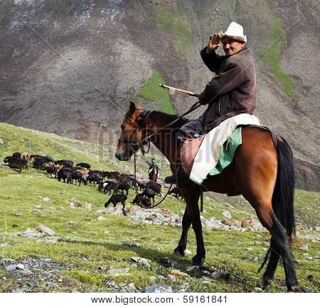 10Th Of October 2013 - Stockrider With Flock In Alay Mountains On Pastureland - Life In Kyrgyzstan