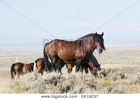 Mccullough Peak Mustangs