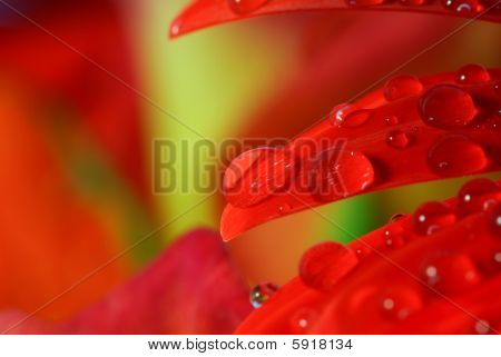 Raindrops on a red flower leaf
