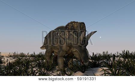 grazing triceratops