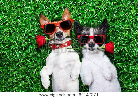 Love Couple Of Dogs