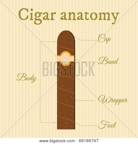Cigar Structure