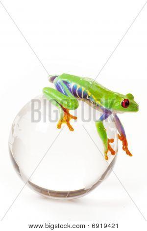 Green Frog od Globe