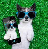 dog taking a selfie while lying on grass meadow in park poster