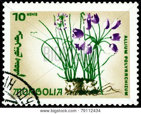 Vintage  Postage Stamp. The Flowerses Allium Polyrrchizum.