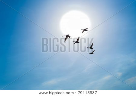 Swans Flying In A Blue Sky Against The Background Of Sun